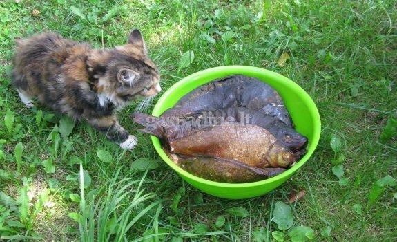 Lauke keptos ežero žuvys
